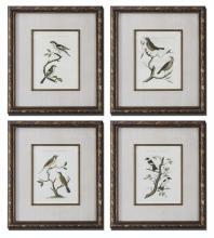 NOZEMAN BIRDS